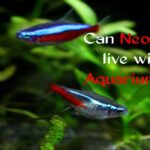 Do Neon Tetras Need Filter